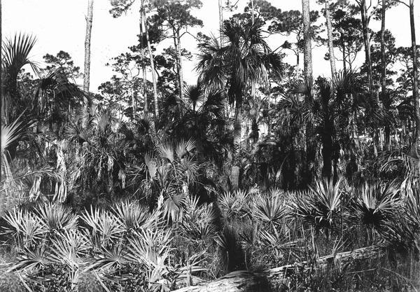 Photo of Pinelands of South Florida